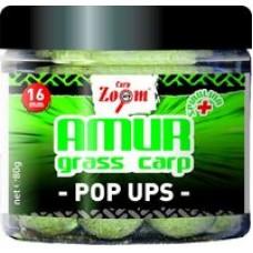 Amur - Grass Carp Pop Ups